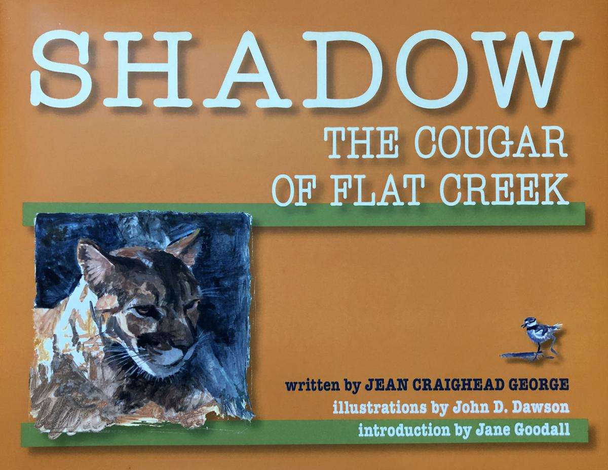 Shadow: The Cougar Of Flat Creek